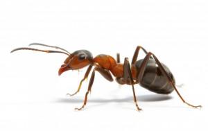prevent ants