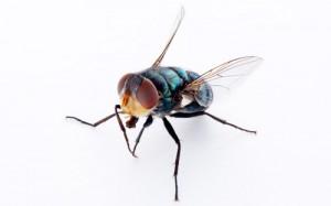 Fly Image V2