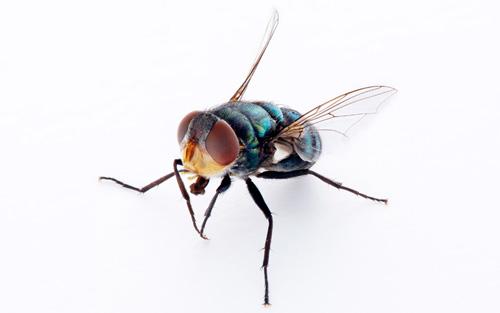 Annoying Pests