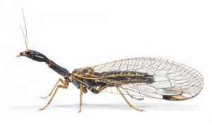 Insect Image V2