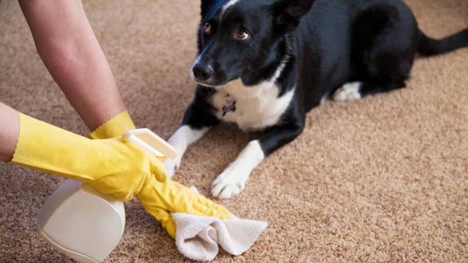 Remove Pet Odour From Carpets