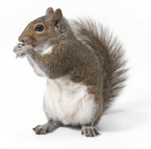 Pest Library Squirrel Image