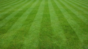 Spring & Summer lawn care advice