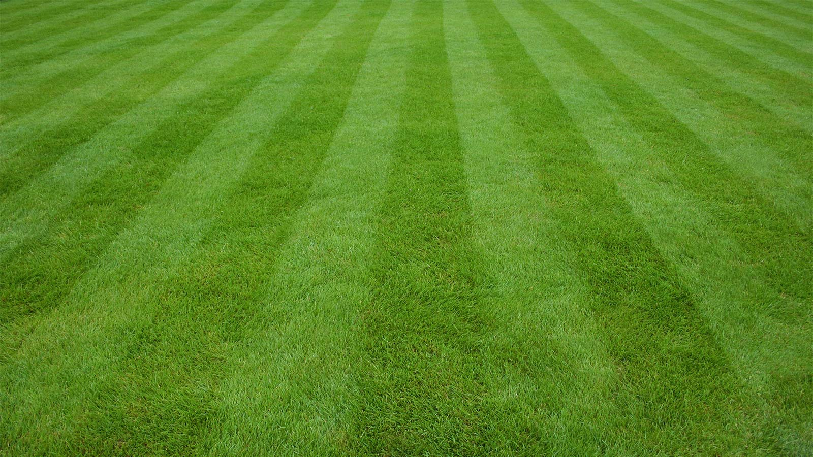Lawn care solutions protech property solutions for Best grass for landscaping