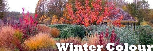 winter-colour-2