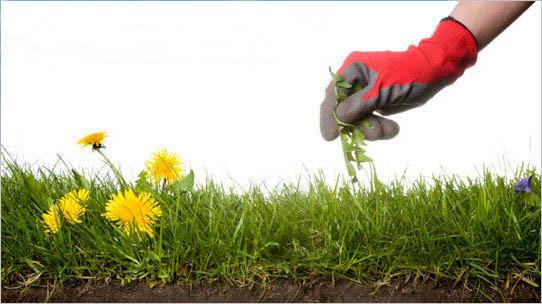Environmentally Friendly Weed Control