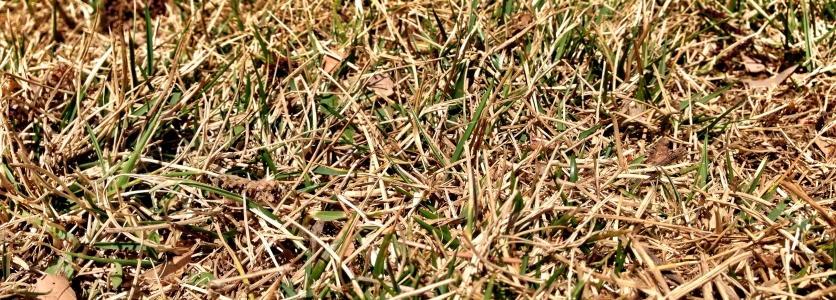 Protect your lawns from extreme heat