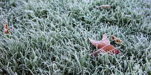 Prepare your garden for frost