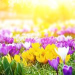 Getting your garden ready for Spring