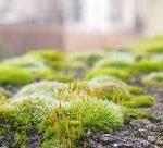 Dangers of moss on pathways